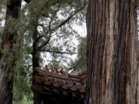 china_woods