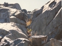 thumbs_palm-springs-2