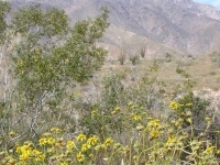 thumbs_sandiegodesert2